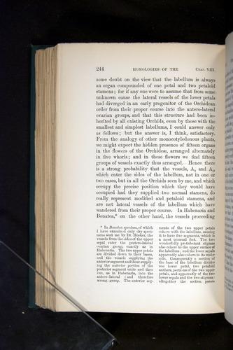 Image of Darwin-F803-1882-244