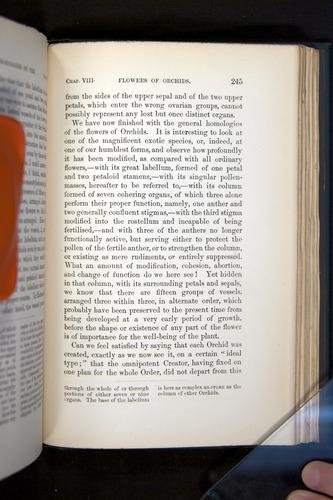 Image of Darwin-F803-1882-245