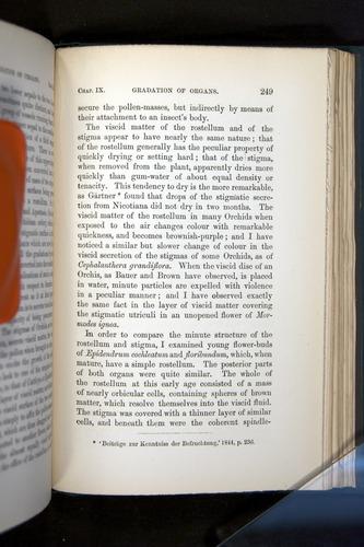 Image of Darwin-F803-1882-249