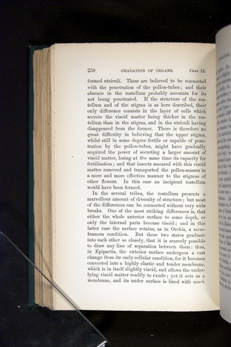 Image of Darwin-F803-1882-250