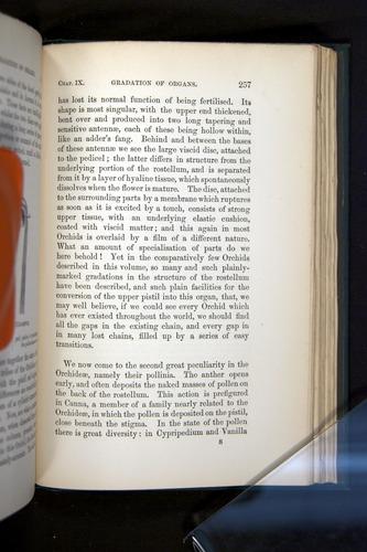 Image of Darwin-F803-1882-257