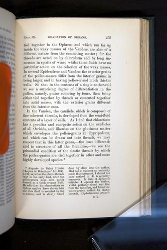 Image of Darwin-F803-1882-259
