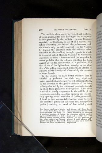 Image of Darwin-F803-1882-260