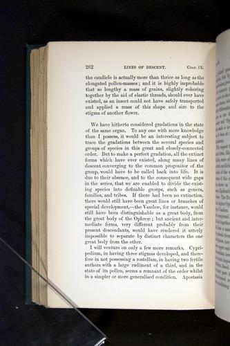 Image of Darwin-F803-1882-262