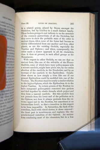 Image of Darwin-F803-1882-263