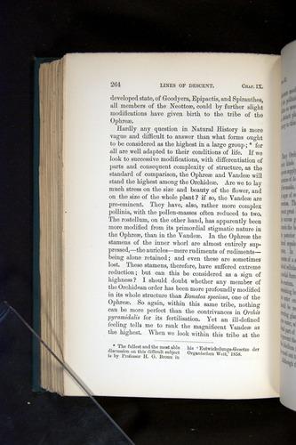 Image of Darwin-F803-1882-264
