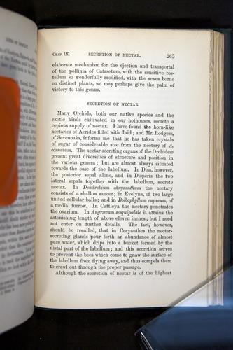 Image of Darwin-F803-1882-265