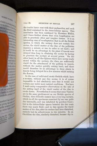 Image of Darwin-F803-1882-267