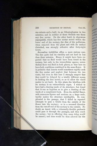Image of Darwin-F803-1882-268