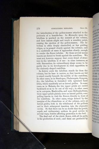 Image of Darwin-F803-1882-276