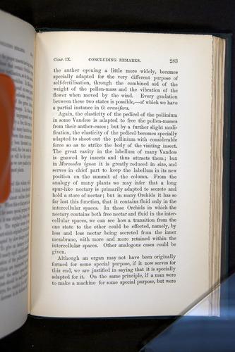 Image of Darwin-F803-1882-283