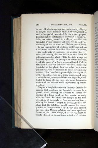 Image of Darwin-F803-1882-284