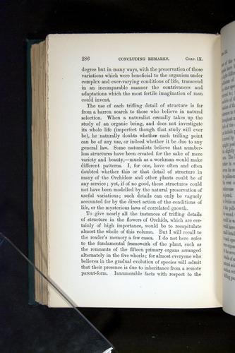 Image of Darwin-F803-1882-286