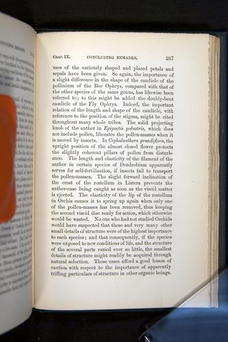 Image of Darwin-F803-1882-287