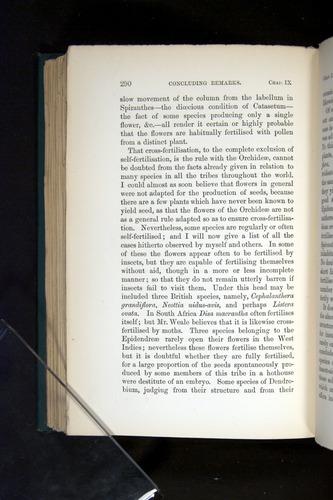 Image of Darwin-F803-1882-290