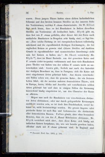 Image of Darwin-F914.1-1868-00056