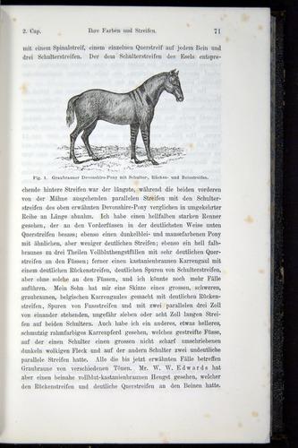 Image of Darwin-F914.1-1868-00071