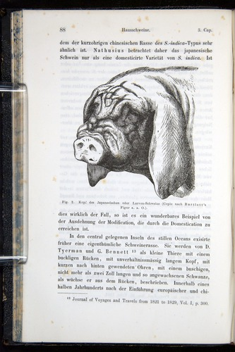 Image of Darwin-F914.1-1868-00088