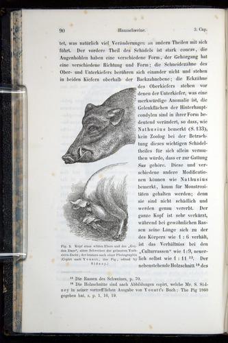 Image of Darwin-F914.1-1868-00090