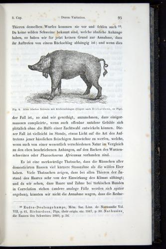 Image of Darwin-F914.1-1868-00095