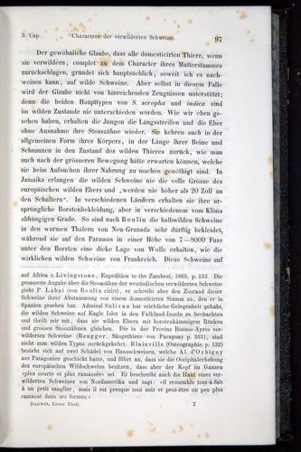 Image of Darwin-F914.1-1868-00097
