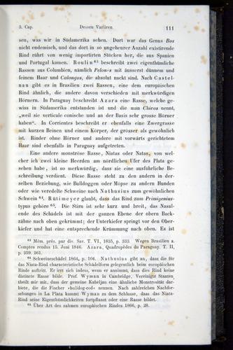 Image of Darwin-F914.1-1868-00111