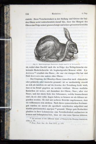 Image of Darwin-F914.1-1868-00134