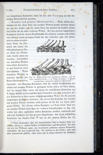 Image of Darwin-F914.1-1868-00151