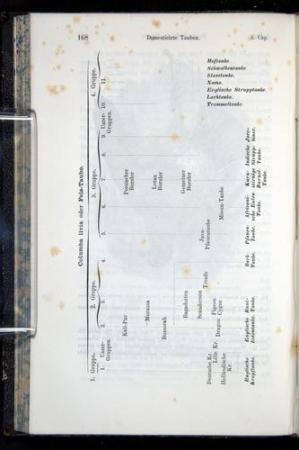 Image of Darwin-F914.1-1868-00168