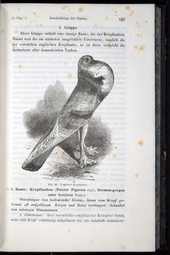 Image of Darwin-F914.1-1868-00169