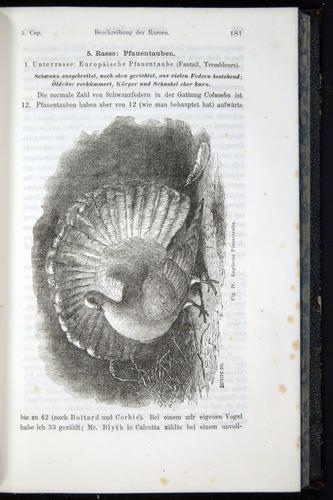 Image of Darwin-F914.1-1868-00181