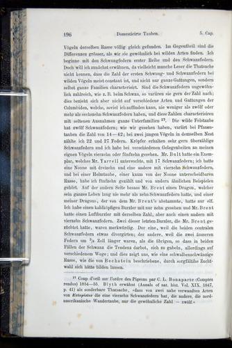 Image of Darwin-F914.1-1868-00196