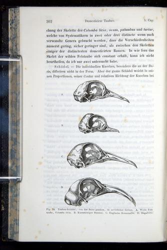 Image of Darwin-F914.1-1868-00202