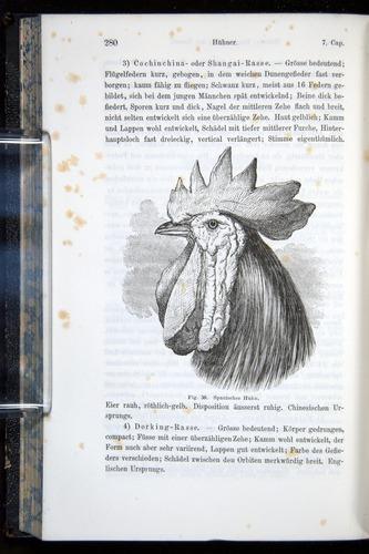 Image of Darwin-F914.1-1868-00280