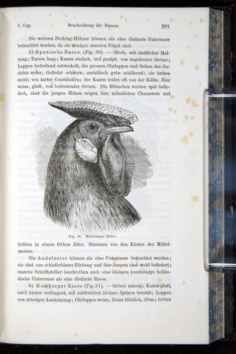 Image of Darwin-F914.1-1868-00281