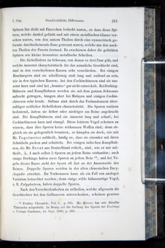 Image of Darwin-F914.1-1868-00315