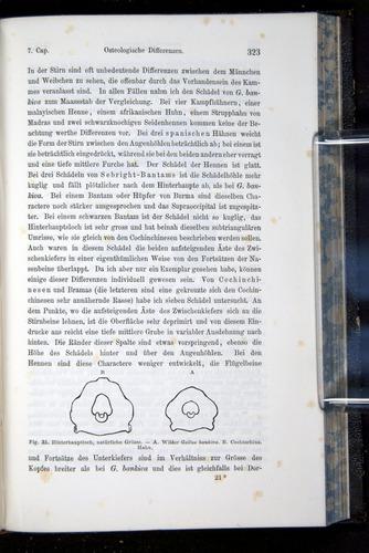 Image of Darwin-F914.1-1868-00323