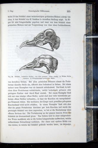 Image of Darwin-F914.1-1868-00325