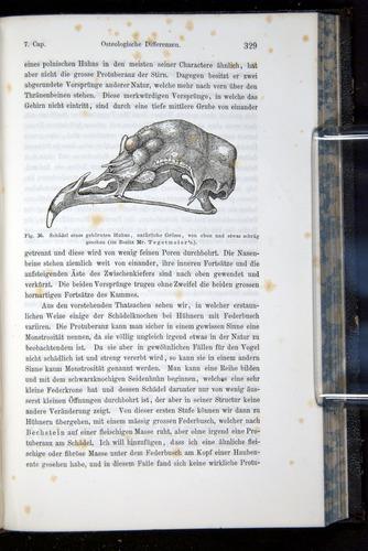 Image of Darwin-F914.1-1868-00329