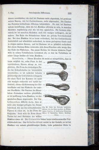 Image of Darwin-F914.1-1868-00333