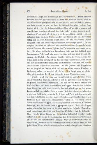 Image of Darwin-F914.1-1868-00352