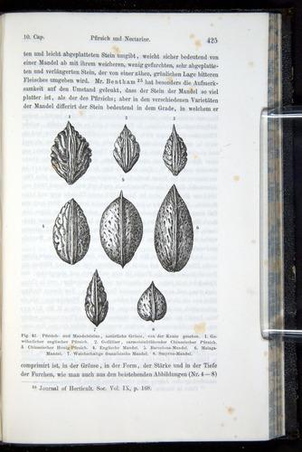 Image of Darwin-F914.1-1868-00425