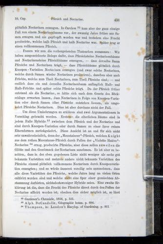 Image of Darwin-F914.1-1868-00431