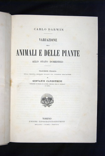 Image of Darwin-F920-1876-000-tp2