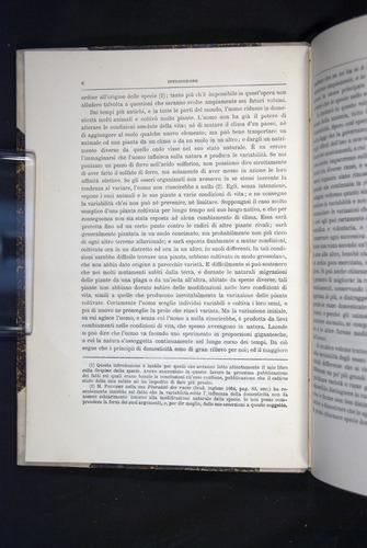Image of Darwin-F920-1876-006