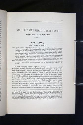 Image of Darwin-F920-1876-015