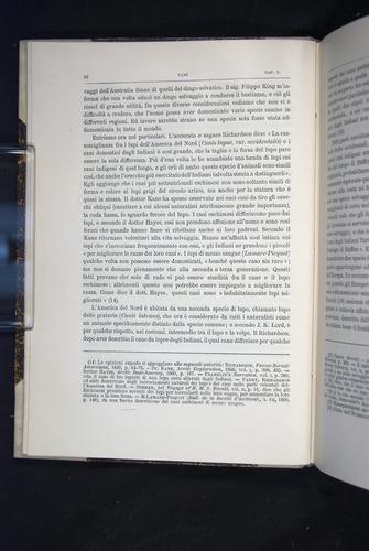 Image of Darwin-F920-1876-020