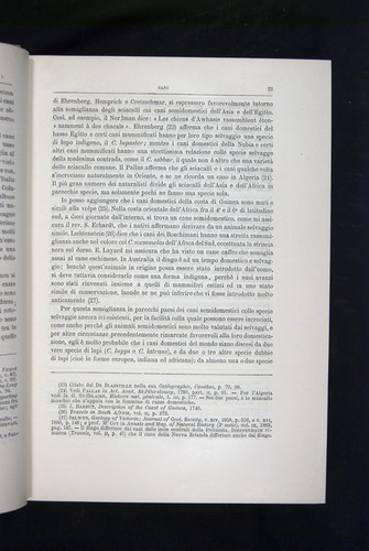 Image of Darwin-F920-1876-023