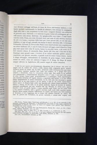 Image of Darwin-F920-1876-025
