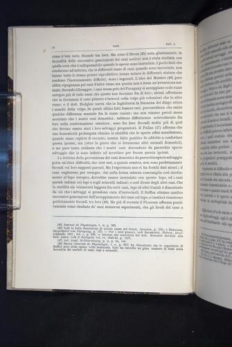 Image of Darwin-F920-1876-028